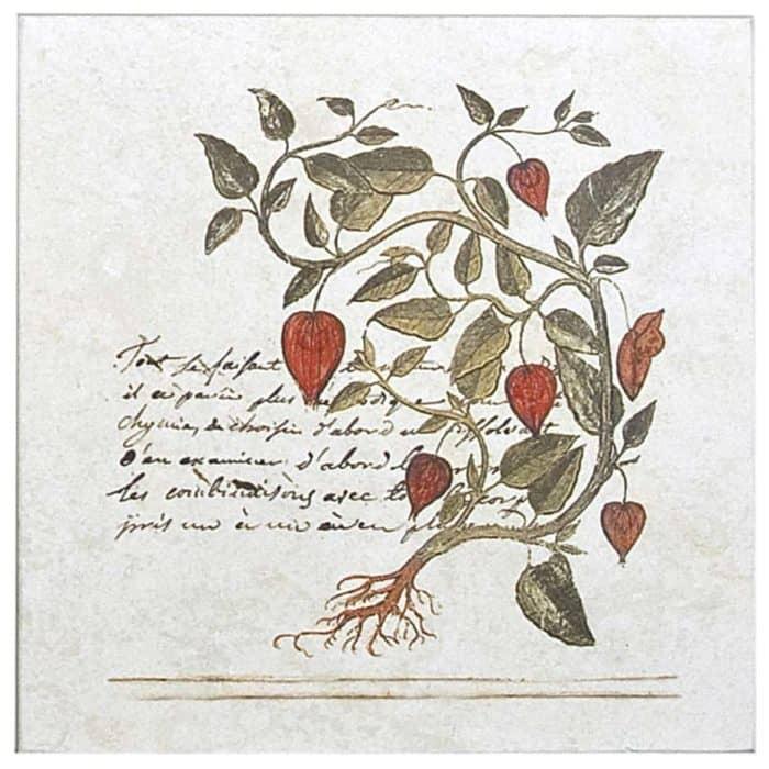 Pushkino Herb Accent