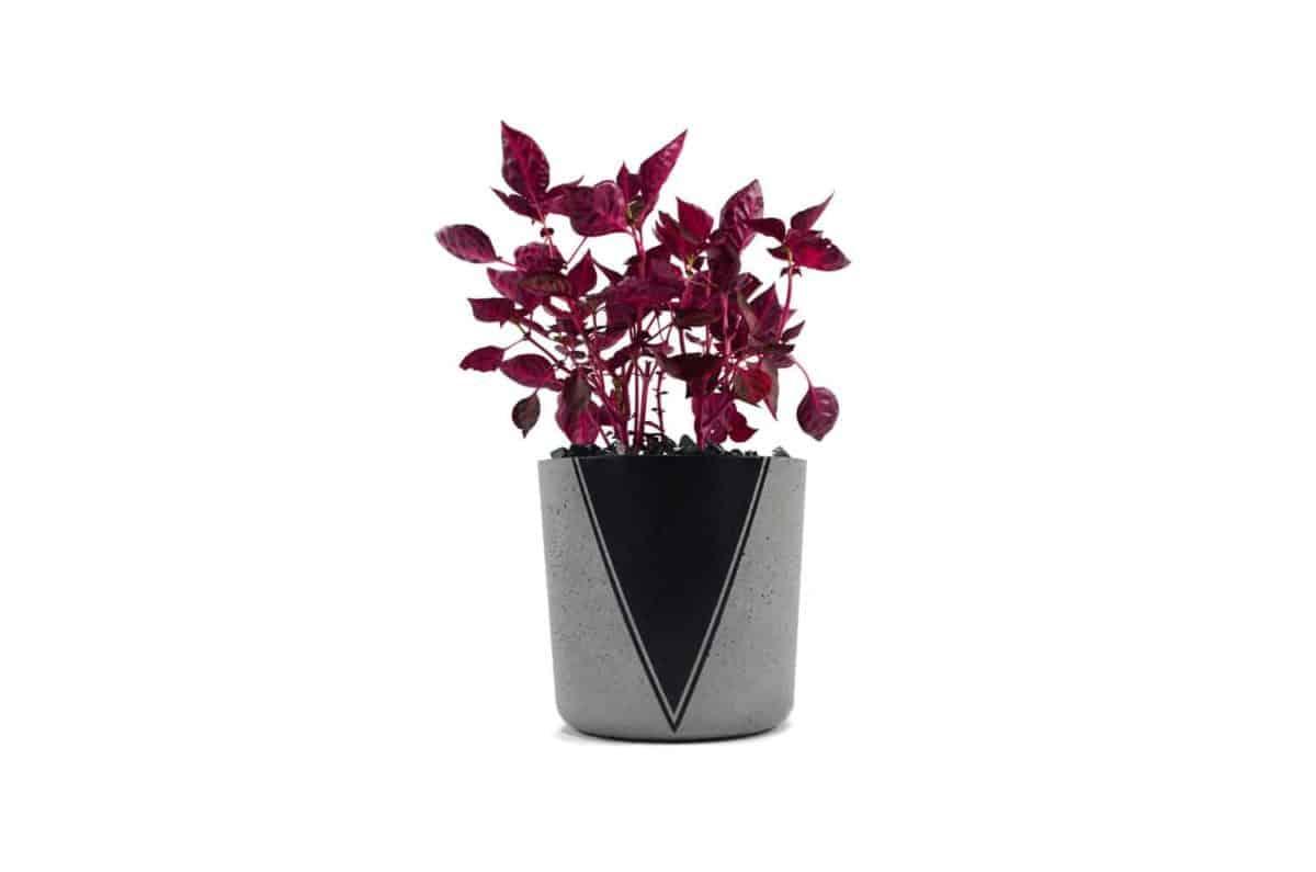Momma Pots planter