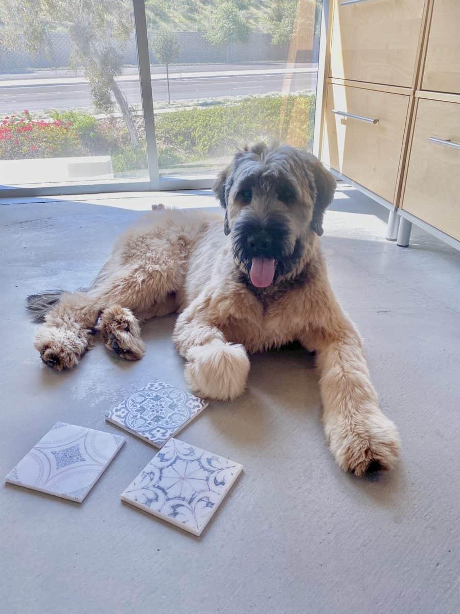 Office dog on floor with art tiles